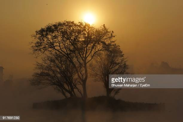 Silhouette Of Tree At Sunset