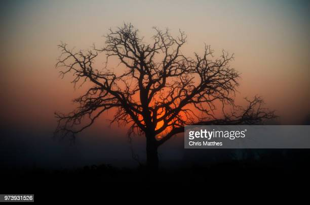 silhouette of tree at sunset, saron, wisconsin, usa - vilas_county,_wisconsin stock pictures, royalty-free photos & images