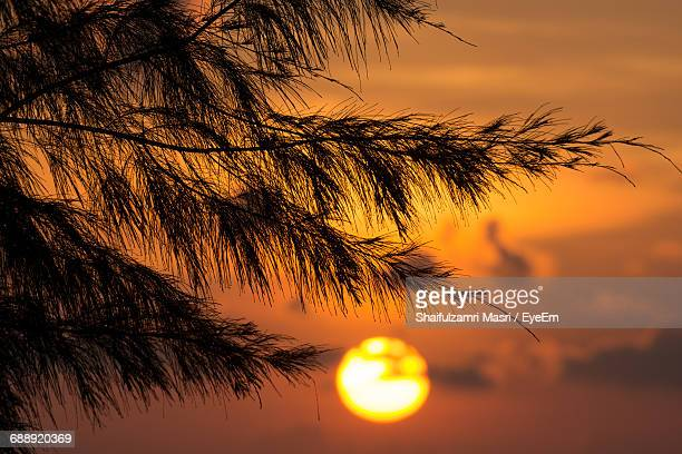 Silhouette Of Tree Branch Against Sky During Sunset