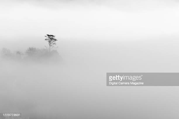 Silhouette of tree branches rising from the mist in a valley near Dartmouth in Devon, England, on January 14, 2019.