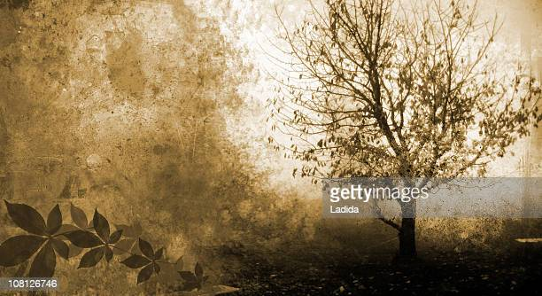 silhouette of tree grunge - garden of eden old testament stock photos and pictures