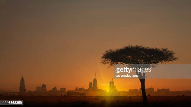 silhouette of tree in front of city skyline at sunset in nairobi, kenya - nairobi stock pictures, royalty-free photos & images