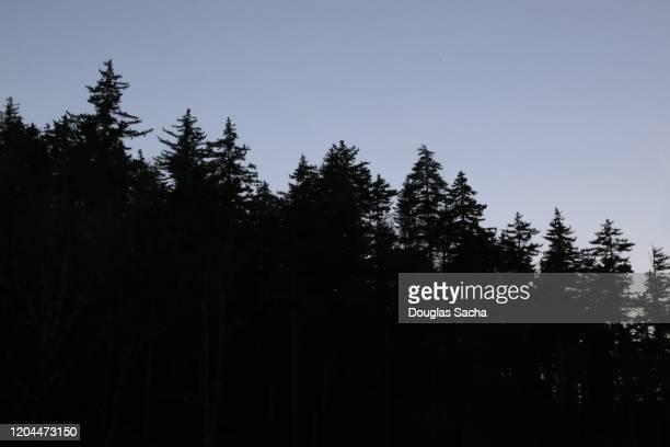 silhouette of tree line on an evening sky - cima di albero foto e immagini stock