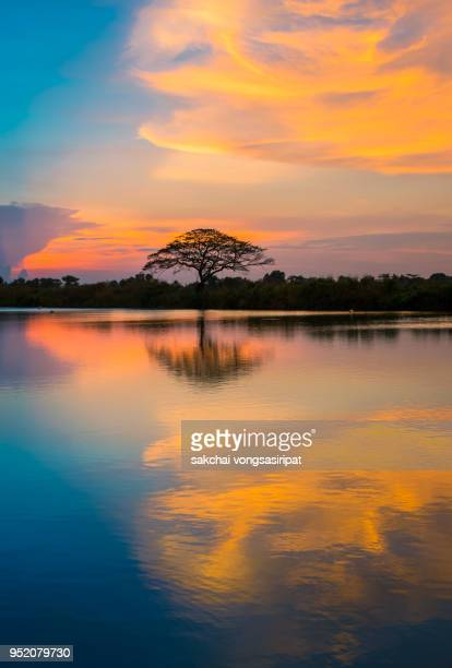 Silhouette of Tree on River Against Dramatic Sky During Sunset