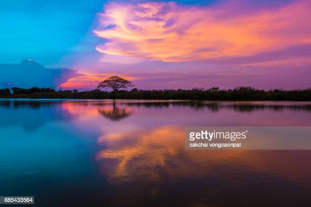 Silhouette of Tree on River Against Sky During Sunset