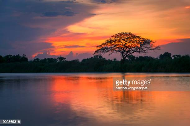 silhouette of tree on river against sky during sunset - パトゥムターニー県 ストックフォトと画像