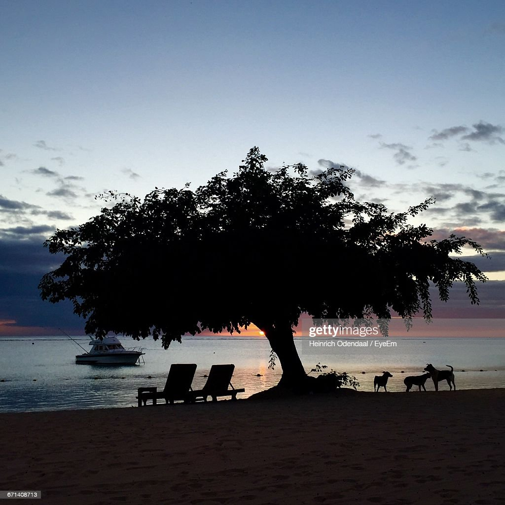 Silhouette Of Tree With Lounge Chairs And Dogs On Beach Stock Photo