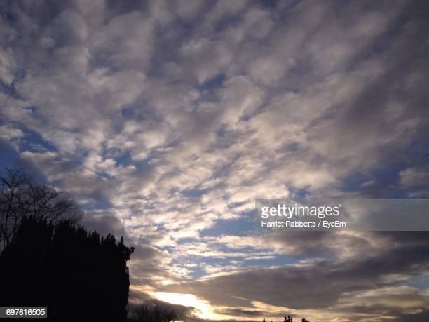 silhouette of trees against cloudy sky - harriet stock photos and pictures