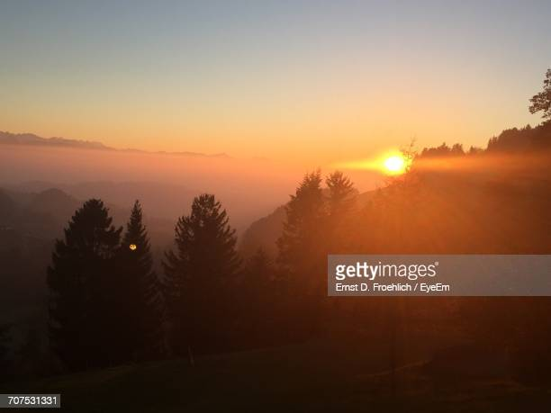 silhouette of trees against sky at sunset - wald stock pictures, royalty-free photos & images