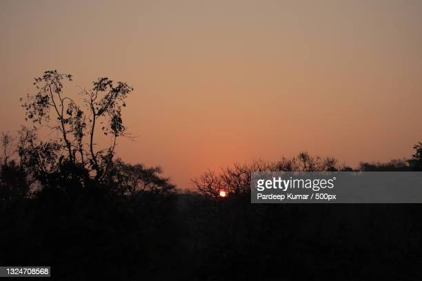 silhouette of trees against sky during sunset,chandigarh,india - chandigarh stock pictures, royalty-free photos & images