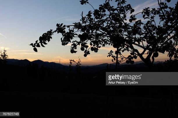 silhouette of trees and mountains at sunset - artur petsey foto e immagini stock