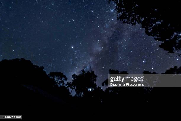 silhouette of trees and the stars at night in maliau basin, sabah borneo. - astronomy stock pictures, royalty-free photos & images