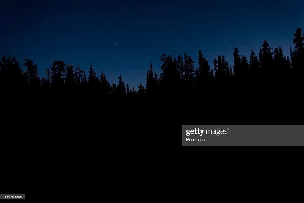 Silhouette of Trees at Night : Stock Photo