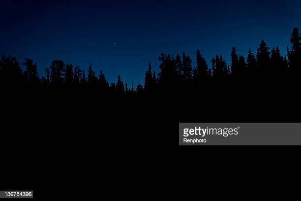 Silhouette of Trees at Night