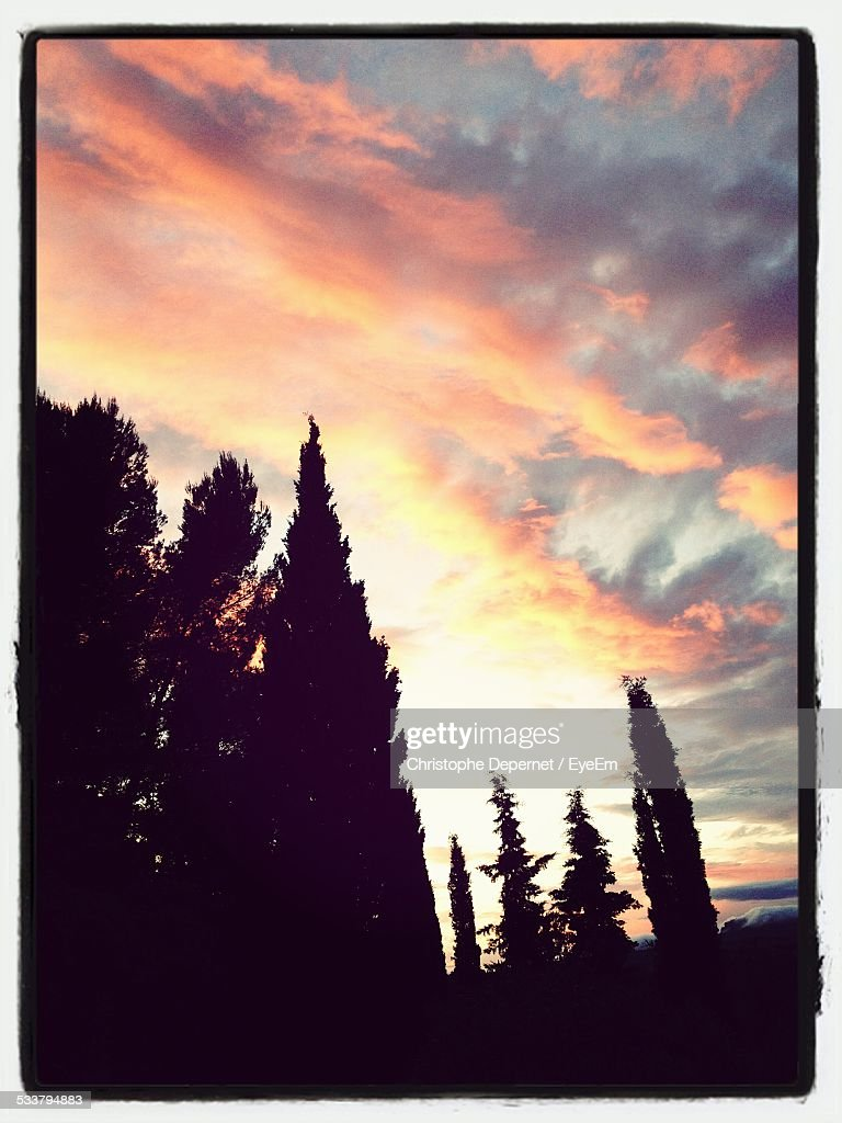 Silhouette Of Trees At Sunset : Foto stock