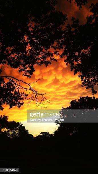 silhouette of trees at sunset - dorothy shelton stock pictures, royalty-free photos & images