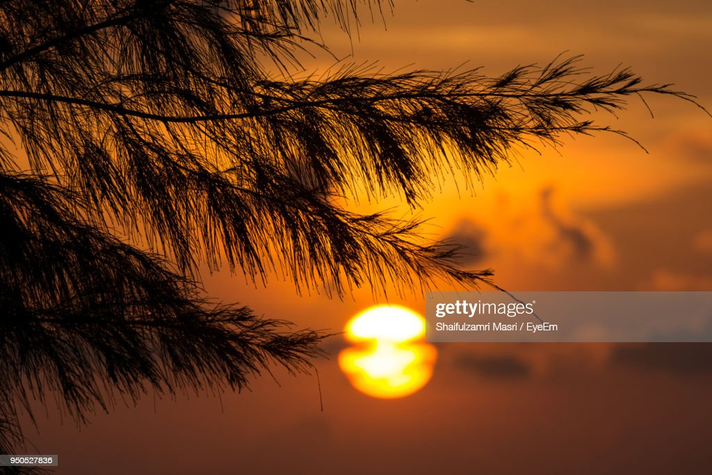 Silhouette Of Trees At Sunset : Stock Photo