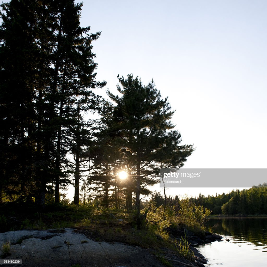 Silhouette of trees at the lakeside : Stock Photo