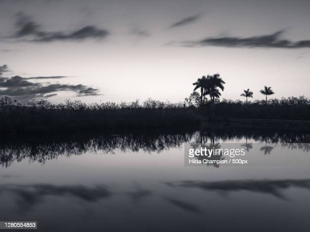 silhouette of trees by lake against sky,florida,united states,usa - anhinga_trail foto e immagini stock