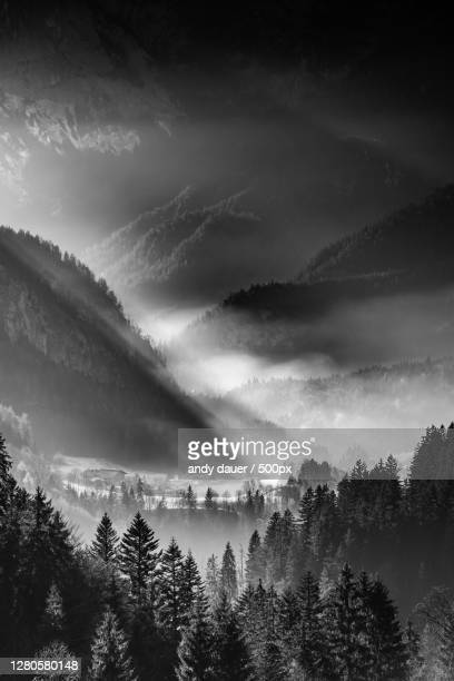 silhouette of trees in forest against sky,unkenberg,austria - andy dauer stock pictures, royalty-free photos & images