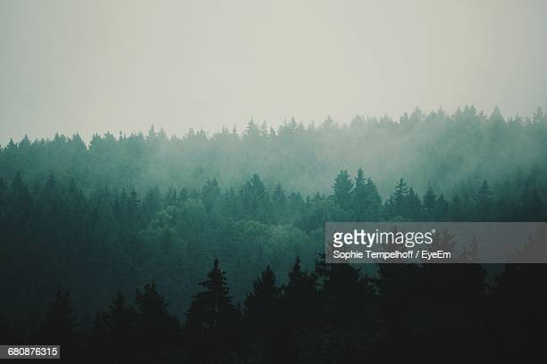 silhouette of trees in forest - evergreen tree stock pictures, royalty-free photos & images