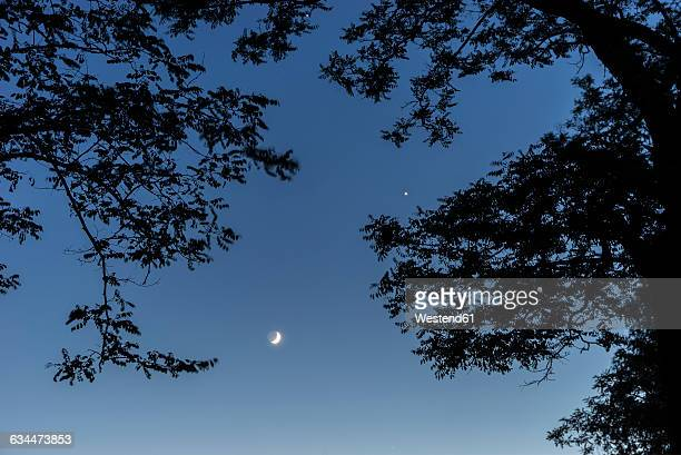 Silhouette of trees, moon and venus