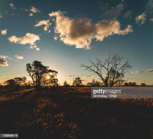 silhouette of trees on field against sky during sunset, wagga wagga nsw, australia - wagga wagga stock pictures, royalty-free photos & images