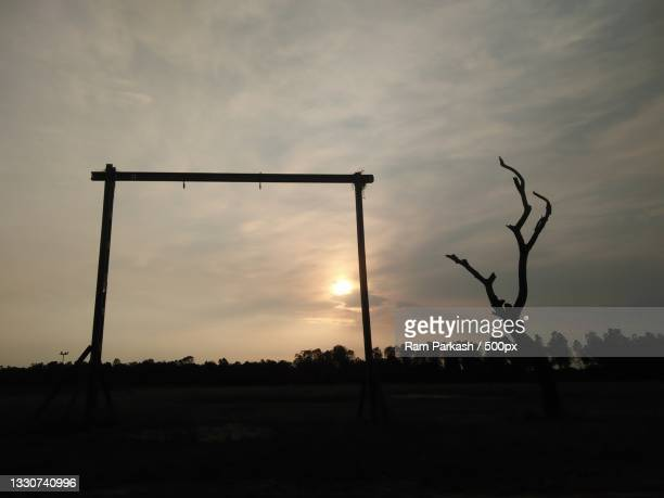 silhouette of trees on field against sky during sunset,chandigarh,india - chandigarh stock pictures, royalty-free photos & images