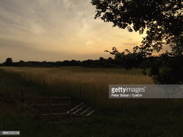 silhouette of trees on field - boban stock pictures, royalty-free photos & images