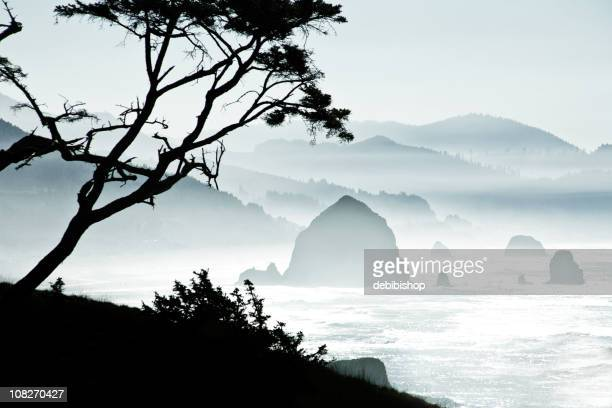 silhouette of trees on misty canon beach, oregon - oregon coast stock pictures, royalty-free photos & images