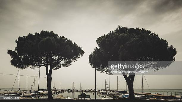 Silhouette Of Trees On Seashore
