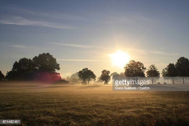 Silhouette Of Trees On Sunny Field In The Morning