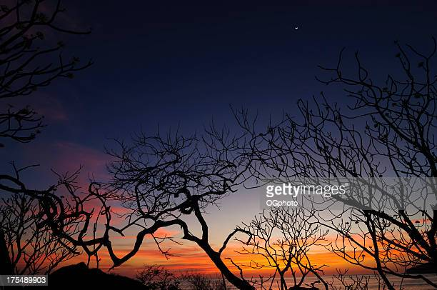 silhouette of twisted trees during sunset - ogphoto stock pictures, royalty-free photos & images