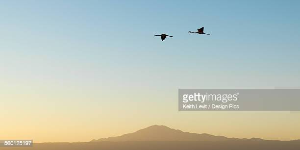 Silhouette of two birds flying across a blue sky at sunset