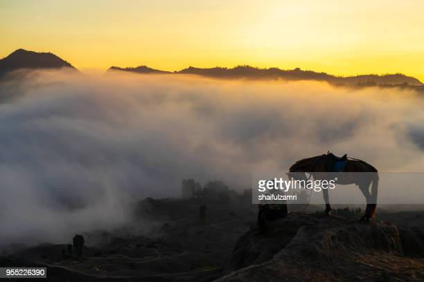 silhouette of unidentified local people or bromo horseman at the mountainside of mount bromo, semeru, tengger national park, indonesia. - mt semeru stock pictures, royalty-free photos & images