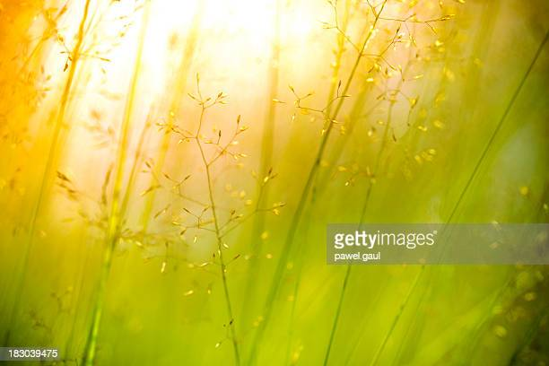 Silhouette of wildflowers in meadow during sunset