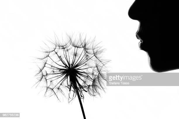 Silhouette of woman blowing dandelion