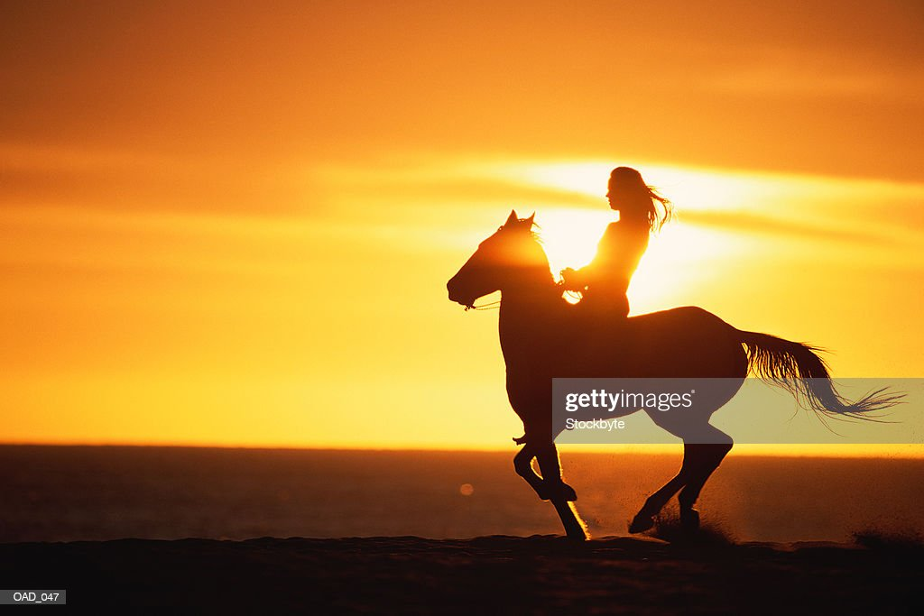 Silhouette of woman riding horse at sunset : Stock Photo