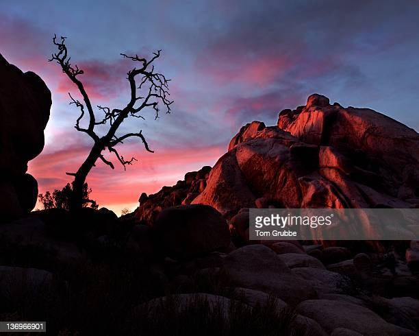 silhouette old tree - tom grubbe stock pictures, royalty-free photos & images
