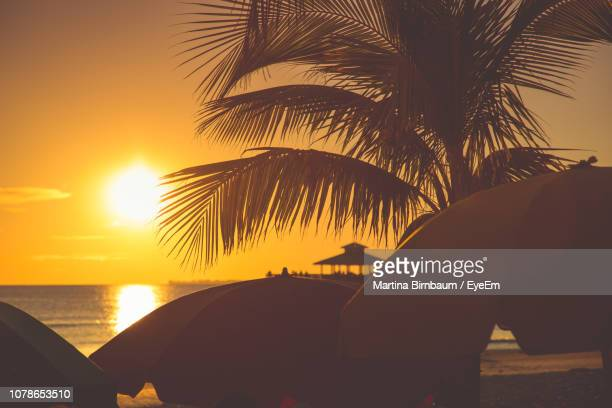 silhouette palm tree by sea against sky during sunset - fort myers beach stock pictures, royalty-free photos & images