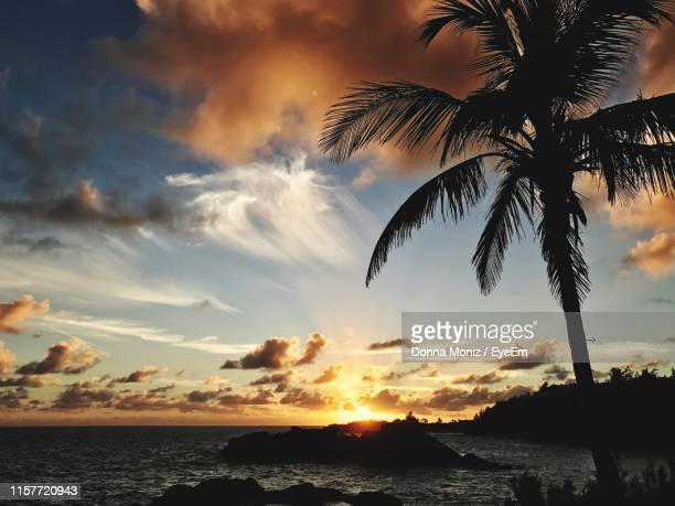silhouette palm tree by sea against sky during sunset - bermuda stock pictures, royalty-free photos & images