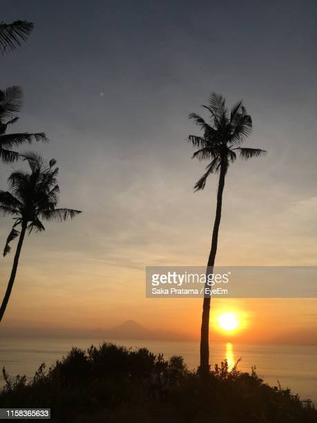 silhouette palm tree by sea against sky during sunset - saka stock pictures, royalty-free photos & images