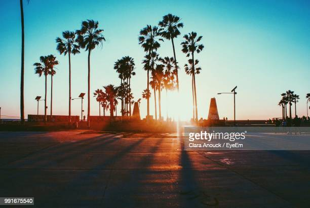 silhouette palm trees against clear sky during sunset - california stock-fotos und bilder