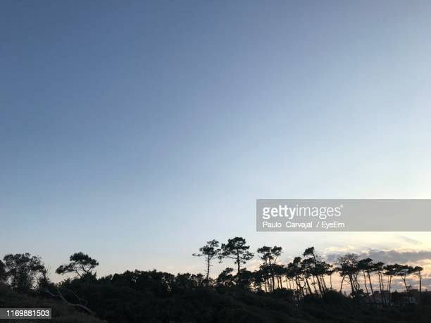silhouette palm trees against clear sky - carvajal stock photos and pictures