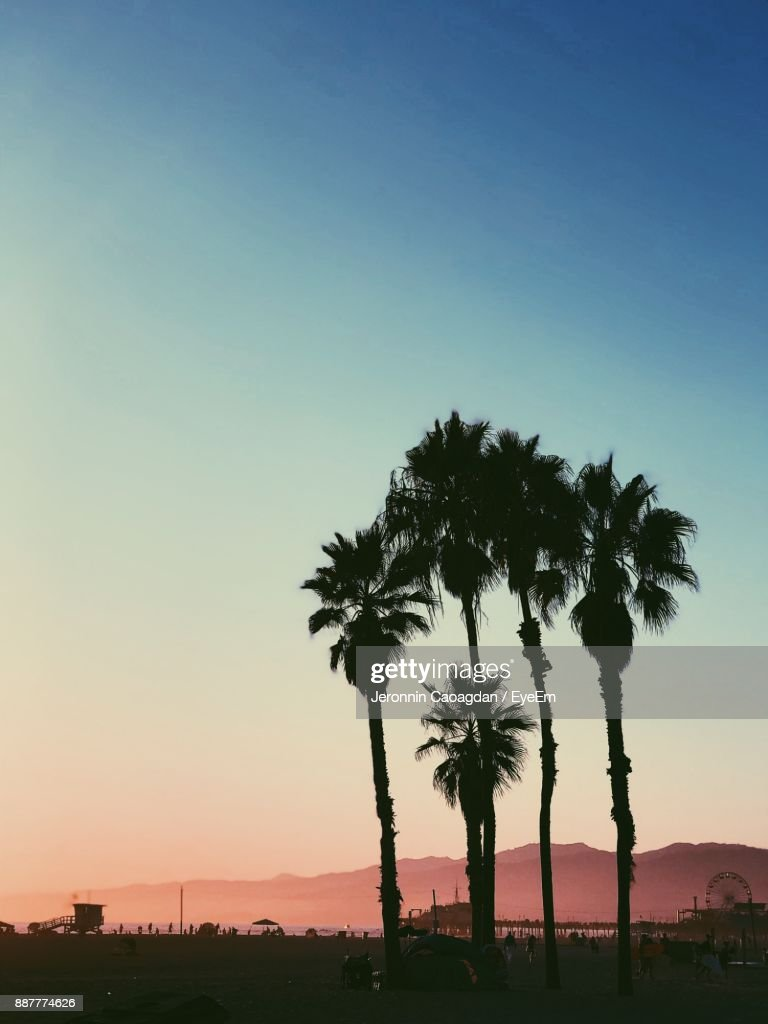 Silhouette Palm Trees Against Clear Sky : Stock Photo
