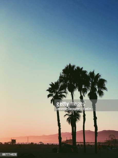Silhouette Palm Trees Against Clear Sky