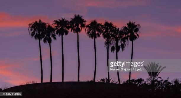 silhouette palm trees against romantic sky at sunset - malibu beach stock pictures, royalty-free photos & images