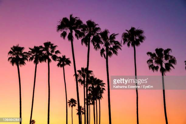 silhouette palm trees against romantic sky at sunset - romantic sunset stock pictures, royalty-free photos & images