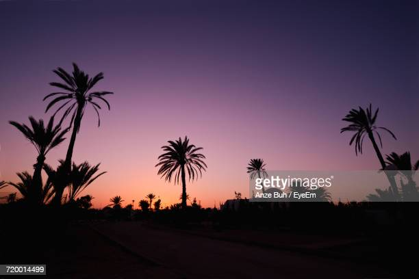 silhouette palm trees against sky at sunset - tunisia stock pictures, royalty-free photos & images