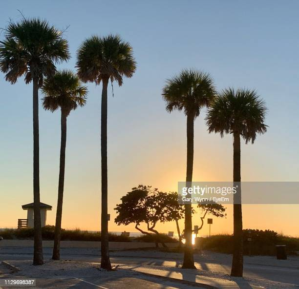 silhouette palm trees against sky during sunset - siesta key bildbanksfoton och bilder